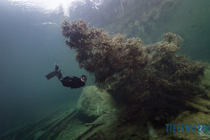 Freediver under the fir